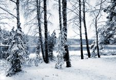 Free Winter Forest In Blue Tones Royalty Free Stock Images - 4019969