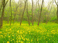 Free Yellow Flowers In The Forest Stock Photo - 40194330