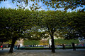 Free Park Trees Royalty Free Stock Photos - 4023158