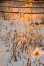 Free Plants In The Rime Stock Photos - 4023783