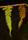 Free Fern Royalty Free Stock Photography - 4024987