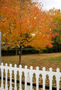 Free Fall Tree On My Front Yard Stock Image - 4025271