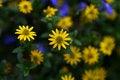 Free Summer Flowers Stock Photo - 4028140