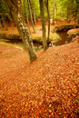 Free Autumn Forest Stock Images - 4029754
