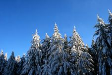 Free Winter Trees Stock Photography - 4020042