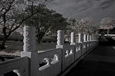 Free Infrared Photo – Tree, Skies And Bridge Stock Images - 4020824