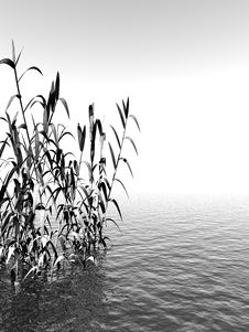 Free Water Plants Royalty Free Stock Images - 4020979