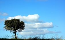 Tree In Plain Of Alentejo. Royalty Free Stock Images