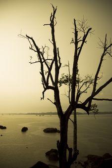 Free Bald Tree Silhouette Royalty Free Stock Photo - 4021415