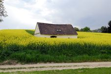 Free Rape Field Royalty Free Stock Images - 4021619