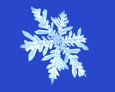 Free Snowflake Royalty Free Stock Photography - 4021927