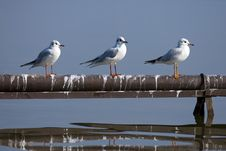 Free Seagull Stock Images - 4022014