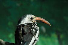 Free Bird Royalty Free Stock Photo - 4022135