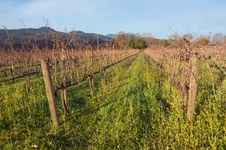 Free Napa Valley Vineyard Stock Image - 4022441