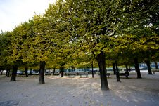 Free Park Trees Royalty Free Stock Image - 4022926