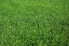 Free Green Grass Field Stock Photography - 4023092