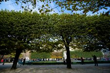 Free Park Trees Royalty Free Stock Photos - 4023158