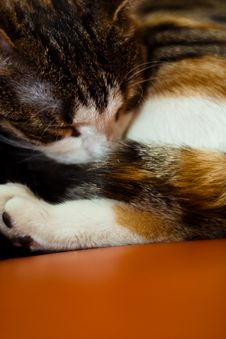 Free Sleeping Kitten Stock Images - 4023904