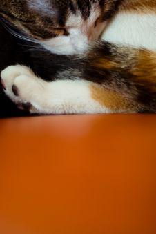 Free Sleeping Kitten Royalty Free Stock Images - 4023959