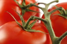 Free Red Juicy Tomatoes Close-up Stock Photo - 4024930