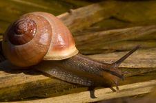 Free Snail Stock Photography - 4025212