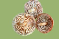 Free Three Mushrooms Stock Image - 4025761