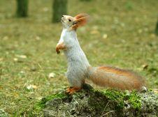 Free Squirrel ( Sciurus ) Stock Image - 4028431