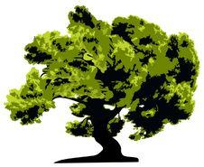 Free Tree  Isolated Stock Photography - 4028482