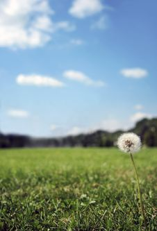 Free Meadow Background Royalty Free Stock Image - 4029166