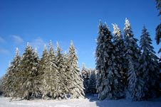 Free Winter Trees Royalty Free Stock Images - 4029249