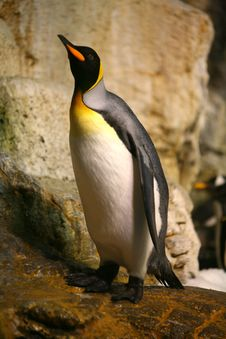 Free Penguin Royalty Free Stock Image - 4029616