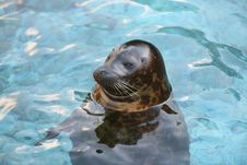 Free Relaxing Sea Lion In Water Royalty Free Stock Photos - 4029628