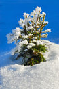 Free Frozen Trees No.5 Royalty Free Stock Photography - 4031857