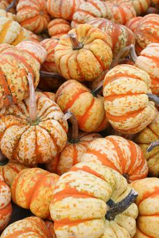 Free Bunches Of Pumpkins Stock Image - 4030041