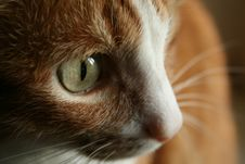 Free Red Cat Stock Images - 4030124