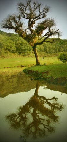 Free Tree And Its Reflection Royalty Free Stock Photos - 4030698