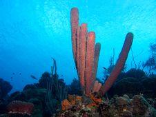 Purple Tube Sponges Royalty Free Stock Image