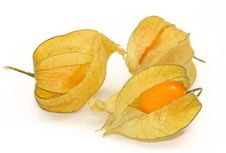 Free Physalis Stock Photography - 4031292
