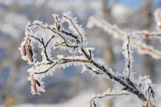 Free Frozen Trees No.3 Royalty Free Stock Photo - 4031805