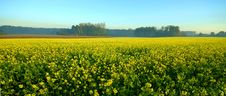 Free Rape Field Stock Photography - 4033312