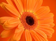 Free Orangesicle Stock Photos - 4033343