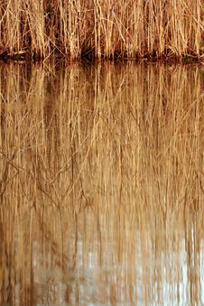 Free Abstract Background Of A Reed Stock Images - 4033914