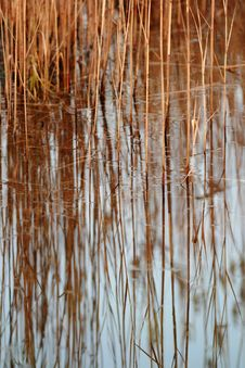 Free Abstract Background Of A Reed Stock Photo - 4034150