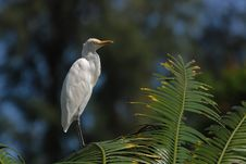 Free Little Egret Standing On The Tree Stock Photos - 4035253