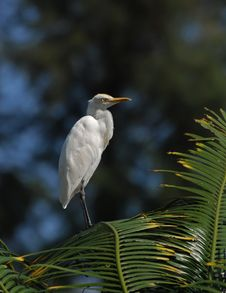 Little Egret Standing On The Rock Stock Photos