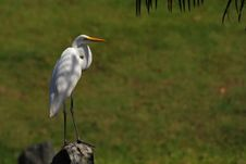 Little Egret Standing On The Rock Royalty Free Stock Photo