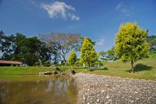Free Tree, Lake And Landscape In The Park Stock Photography - 4035282