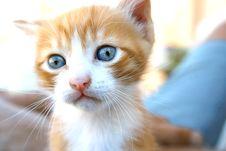 Free Kitten Royalty Free Stock Image - 4035476