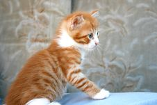 Free Kitten Royalty Free Stock Images - 4035569