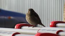 Free Sparrow In Market Stock Photo - 4036440